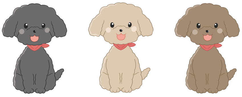 Smiley Toy Poodle