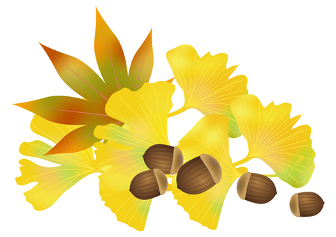 Accor and autumn leaves ginkgo 5
