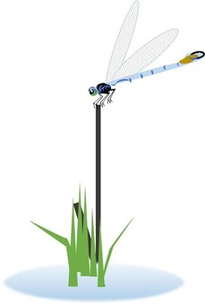 Dragonfly that fits in a tree
