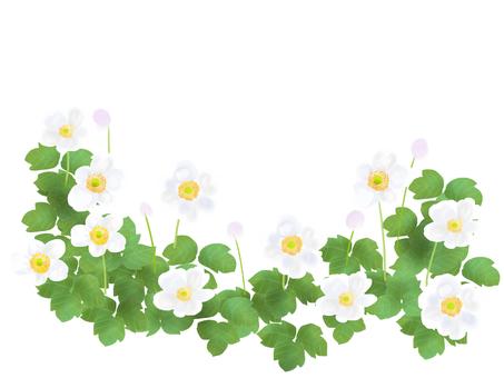 Shu-chrysanthemum (white flower) white