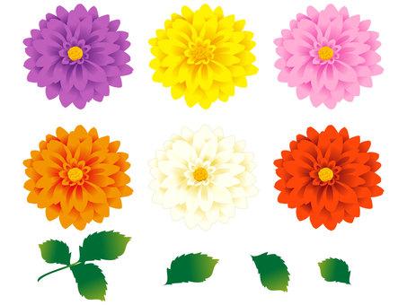 Dahlia's flower set