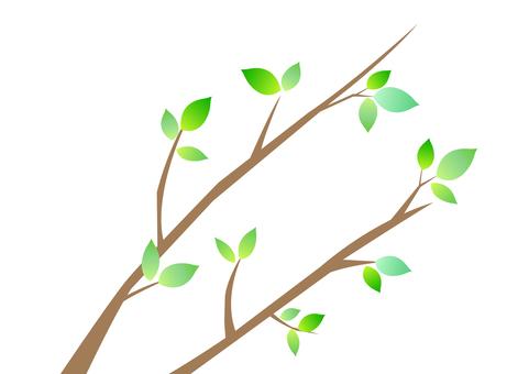 Tree branch 3