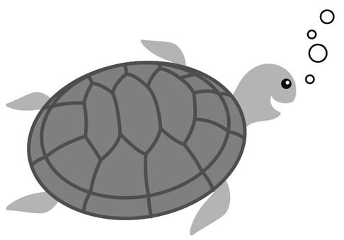 거북 Turtle