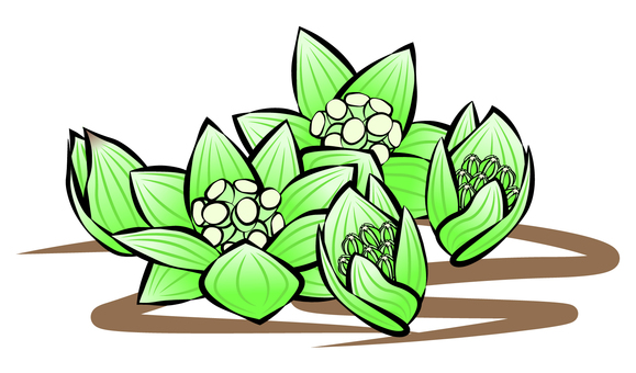 Fukino (blooming from a bud)