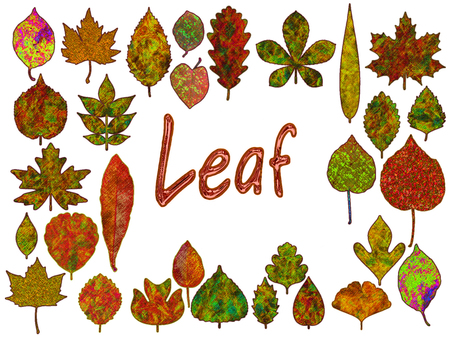 Various kinds of leaves