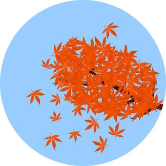 Maples 2 (Orange)