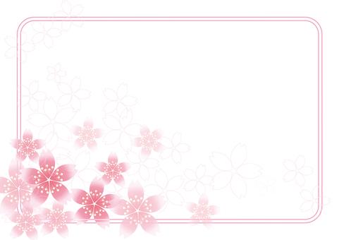 Sakura Sakura & Board 57