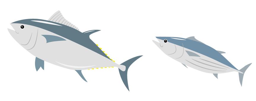 Tuna and bonito