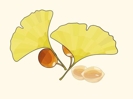 Autumn ginkgo ① Classic
