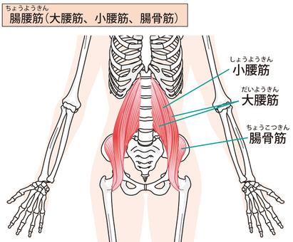 Iliopsoas muscle