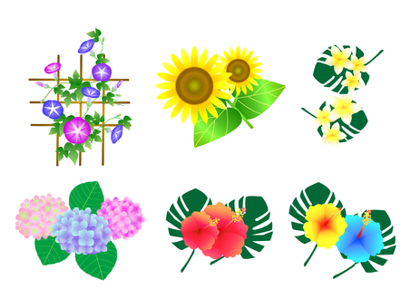 Summer flower illustration set