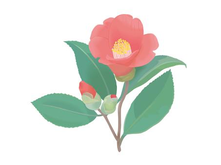 Red camellia 2