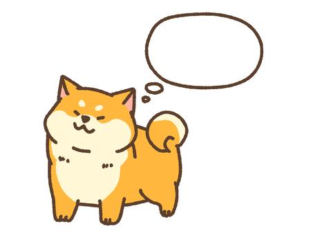 Shiba thinking
