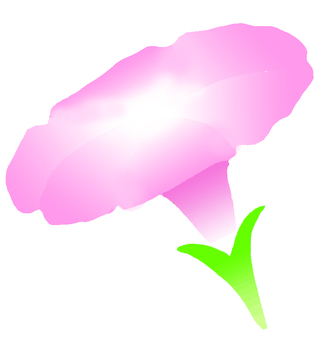Asagao pink
