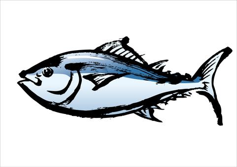 金槍魚03