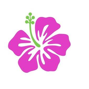Hibiscus 14