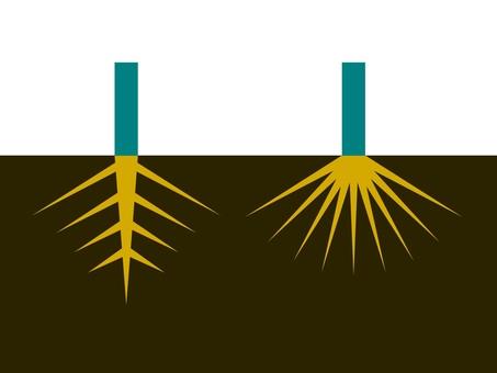 속씨 식물의 뿌리