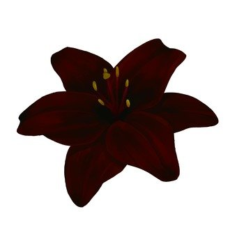 Up of crimson lilies