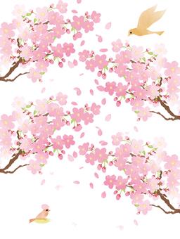 벚꽃과 조류