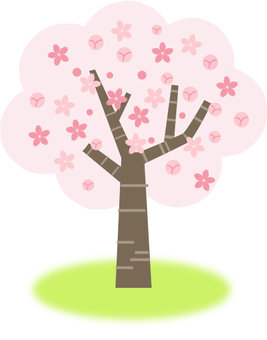 Sakura tree five branches blooming