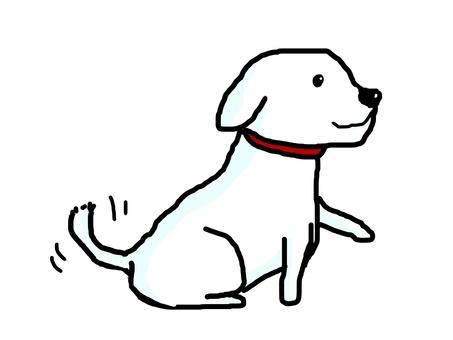 A white dog.