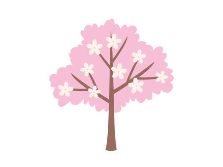 꽃이 만발하는 벚꽃 나무 1