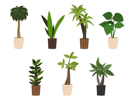 Assortment of plantplants 1