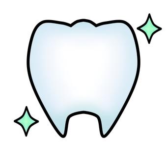 건강한 치아 (윤곽선 있음)