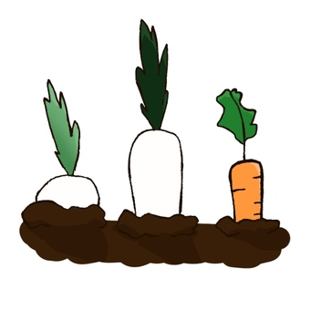 Vegetables buried in the soil