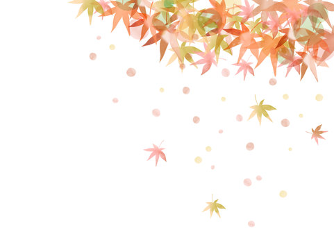 Season material 023 Maple