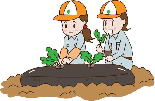 Agriculture (seedling planting)