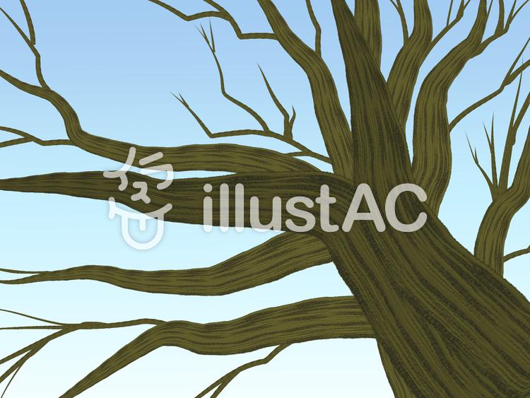 見上げる木(枯)のイラスト