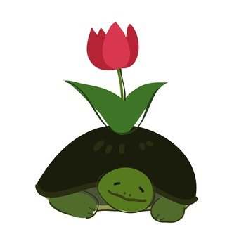 Turtle and tulip