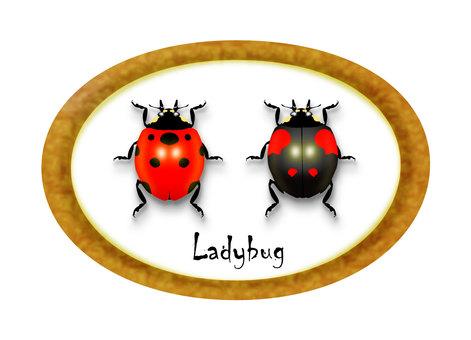 Ladybug specimens