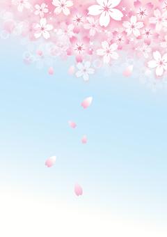 Sakura 30