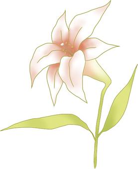 Pinkish white lily Ⅲ