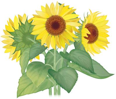 Sunflower / Part 6