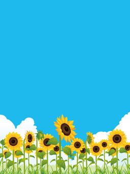 Summer refreshing sunflower field (sunflower) background 04