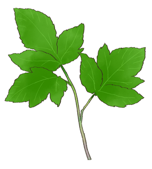 Tomorrow leaves