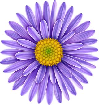 Coyomena flowers