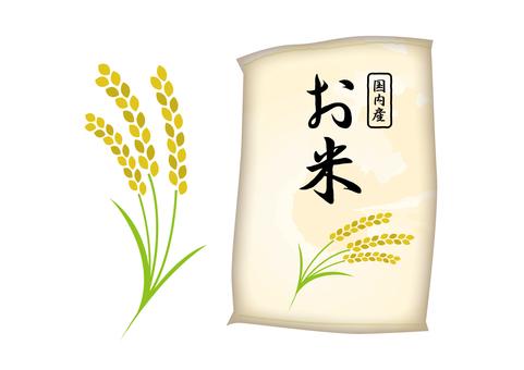 Rice _ Illustration