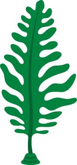 Seaweed seaweed seaweed