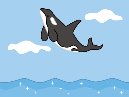 A orca to jump
