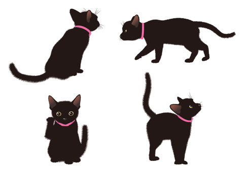 Black Cat Pause 002