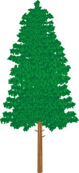 Hinoki Tree Forest
