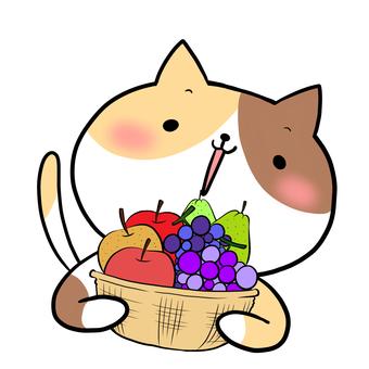 과일 바구니와 고양이 삼색 털