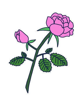 Rose, Rose (colored)