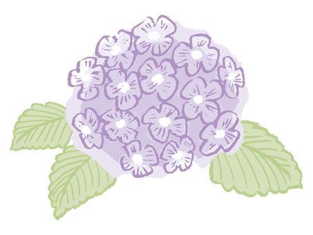 Hydrangea (purple)