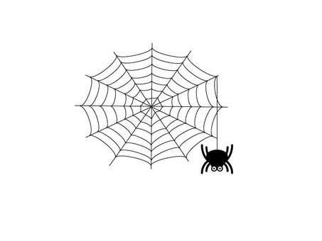 Spider's web and spider