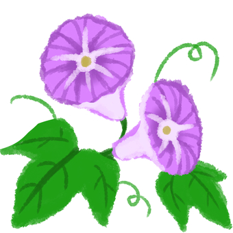 Asagao purple